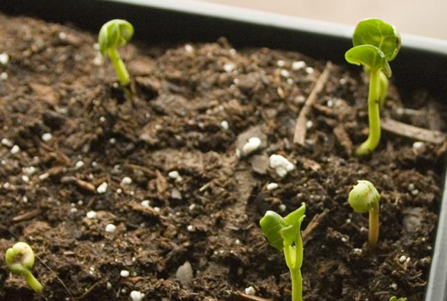 plant-babies.jpg