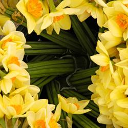 small-daffodils.jpg