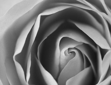 bw-rose.jpg