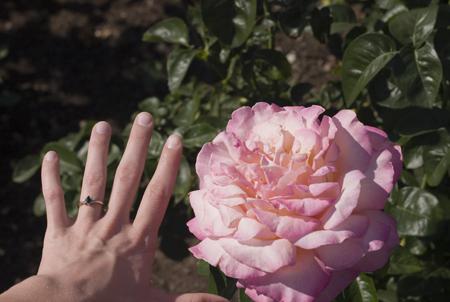 hand-rose.jpg