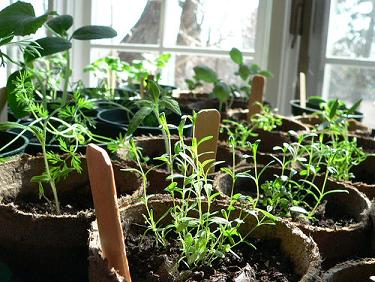 seedlings1.jpg