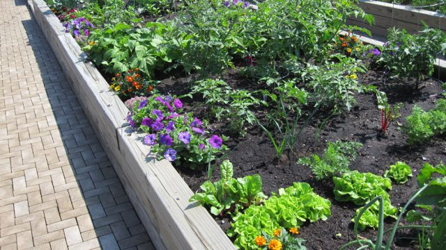 Vegetable Garden with Flowers