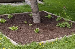 back-garden-after-2