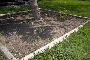 back-garden-before